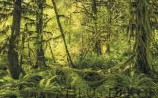 Stefan Hefele Forest Land